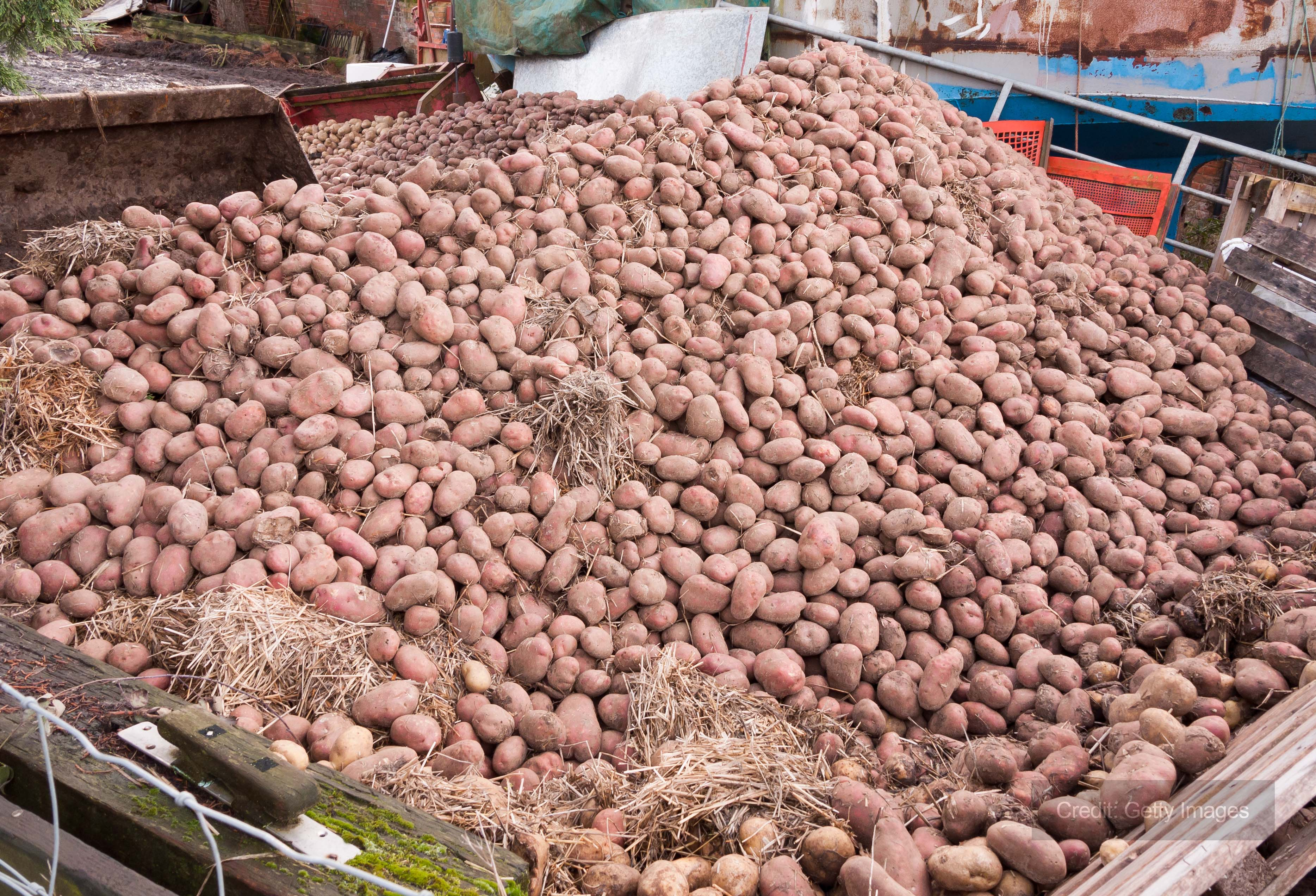 Andrews Dehumidification keep freshly harvested potatoes unspoiled