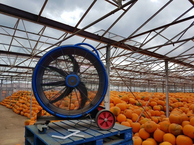 UK's largest pumpkin growers seek ventilation equipment for Pumpkin yield