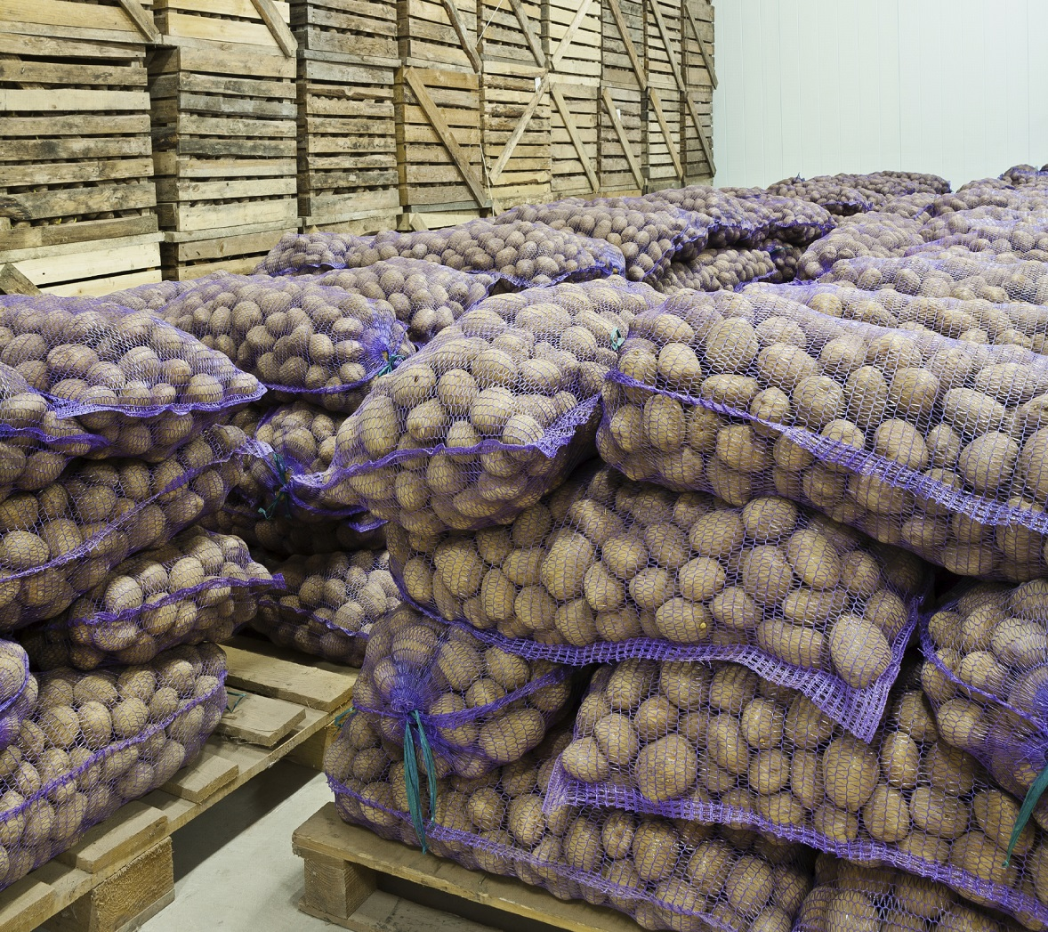 Bespoke heating hire helps UK's largest supplier of potatoes preserve produce